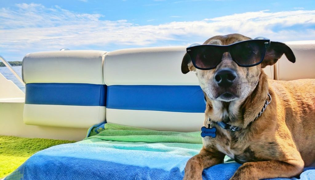 What Does Dog Days Of Summer Mean